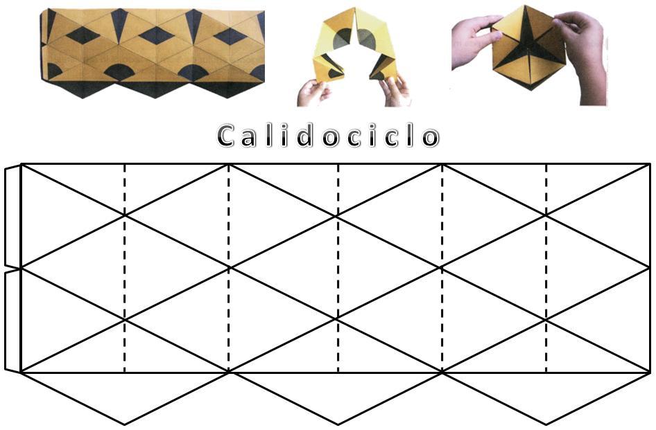 Calidociclos